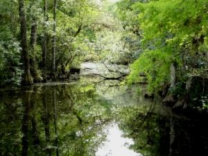 Everglades_swamp