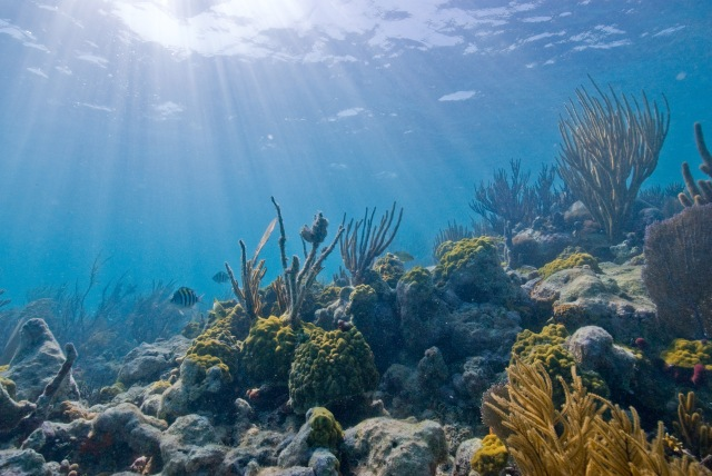 Biscayne National Park contains one of the largest coral reefs in the world